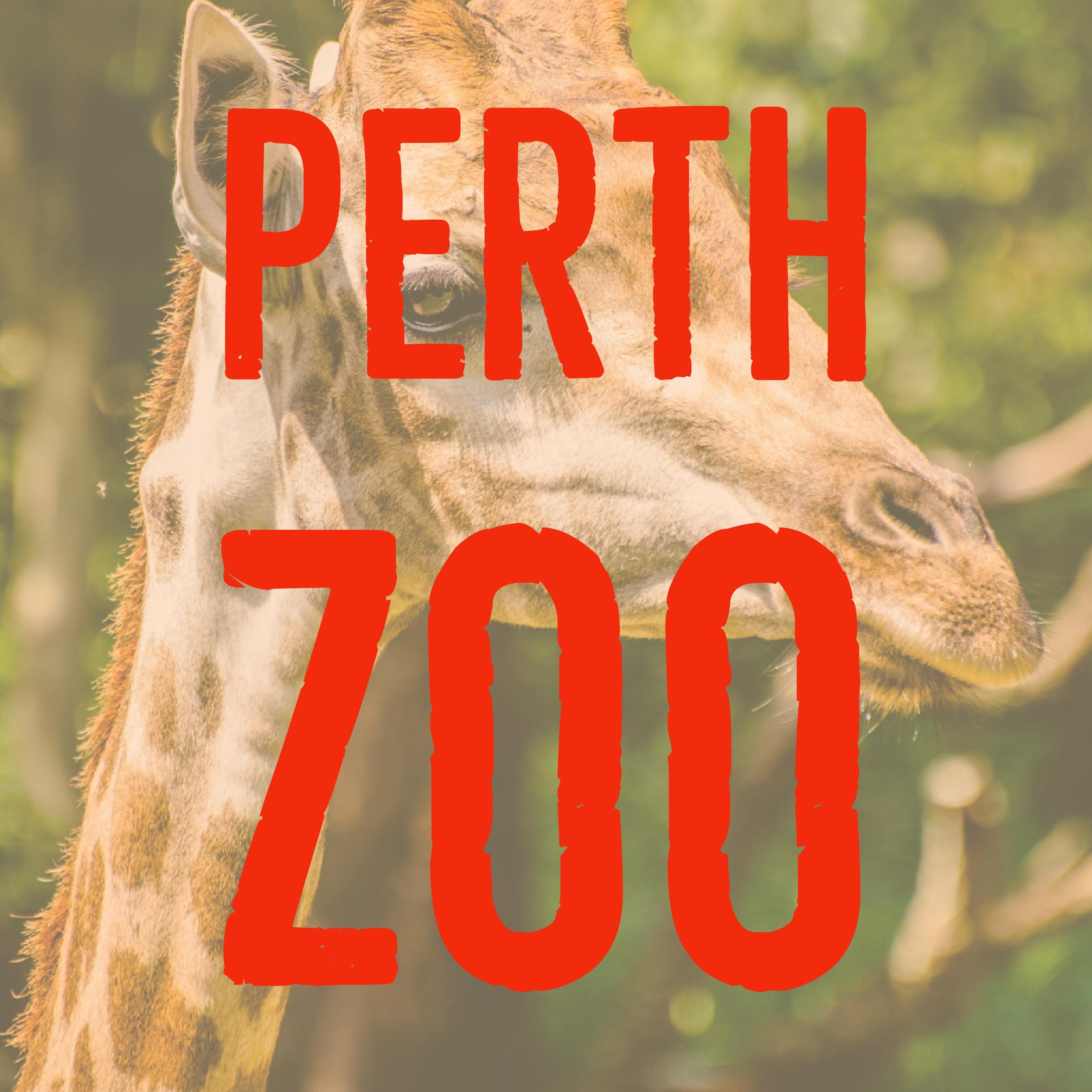 Perth Zoo Excursion