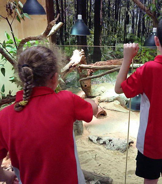 Zoo Excursion