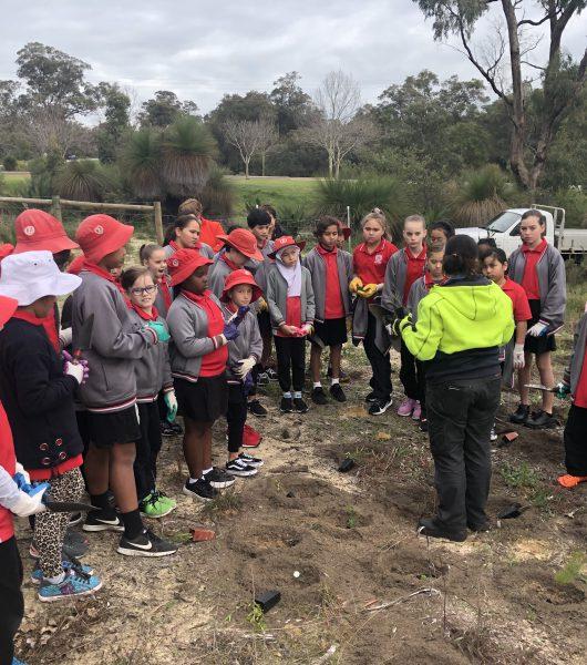 Tree Planting Bibra Lake