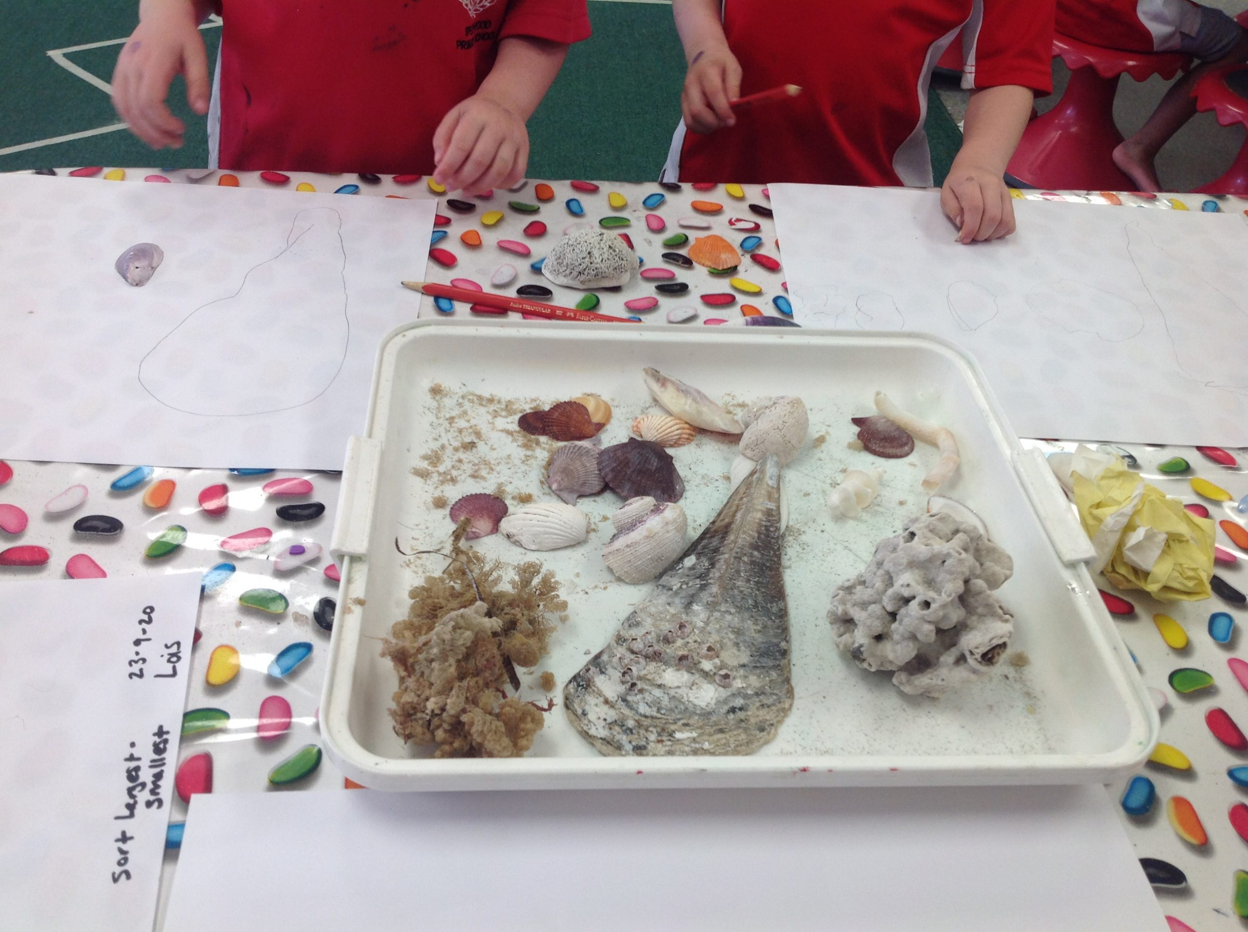 EC1 Kindy seashell size sort and pattern play